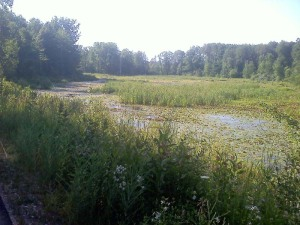 pond along the Pere Marquette rail trail