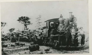 Logging19