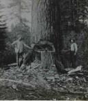 Logging49