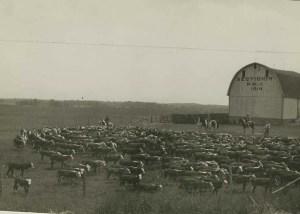corwell-farm